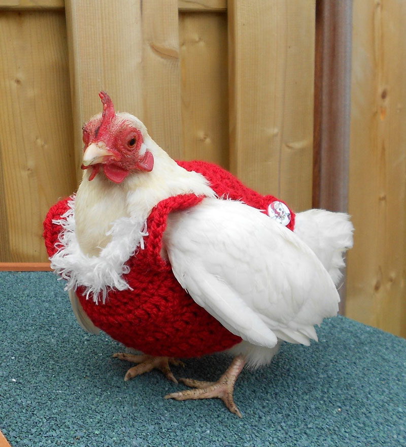 Gallina Fashion